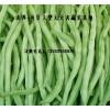 大量供应(提供);菜豆,架豆王,四季豆等