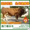 肉牛育肥牛种牛牛犊价格