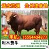 如何购买好的肉牛品种