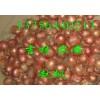 供应优质珠葱(吉林农安)