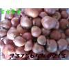 吉林农安出售红葱头毛葱