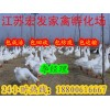 朗德鹅苗|朗德鹅苗价格|鹅苗多少钱一只?