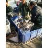 莱芜草鱼苗,山东最知名的草鱼苗生产基地