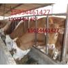云南哪里有肉牛犊云南哪里的肉牛品种好云南哪里有养殖场