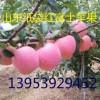 山东红富士苹果价格苹果批发价格