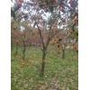 供苹果树,核桃树,桃树,山楂树,杏树,梨树,樱桃树