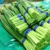 大量低价供应山东优质冷库保鲜蒜苔