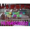 18764958222供应小猪猪场生猪苗猪今日山东仔猪价格