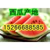 15266688585山东京欣西瓜产地报价