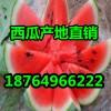 京欣西瓜3毛产地直销
