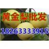 18263333915山东黄金梨苹果基地皇冠梨产地价格