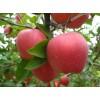 今日新红星,红将军苹果上市批发价格便宜