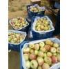 山东嘎啦美八苹果行情最新价格