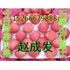 山东红星苹果产地预订15266679888