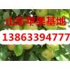 13863394777山东红星苹果产地价格