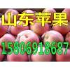 山东红星苹果产地批发价格