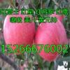 红星苹果什么价格山东苹果多钱一斤