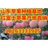 沂蒙山区红富士苹果供应价格18263333915