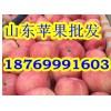 18769991603供应山东红富士苹果苹果价格