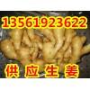 山东生姜批发产地批发市场价格13561923622