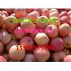 大量红富士苹果急售、万斤红富士苹果降价了急售