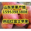 产地苹果批发低价供应/红富士苹果保质保量