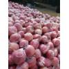 18253906116红富士苹果产地最新批发价格