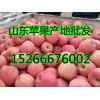 最新红富士苹果价格多钱一斤?