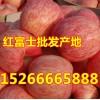 15266665888山东红冨士苹果价格批发