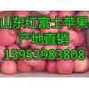 供应山东优质红富士苹果批发产地货源充足诚信供应