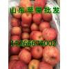 供应山东苹果价格15266676002大量批发供应