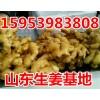 山东面姜 姜种批发价格行情15953983808