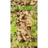 山东生姜基地供应优质大姜小姜面姜姜种价格
