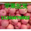 2017年山东红富士苹果近期什么价格