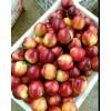 优质油桃价格一降再降