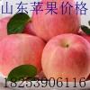 18253906116山东嘎啦美八苹果供应黄金梨