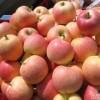 山东省优质嘎啦/美八早熟苹果大量上市,果园低价直销