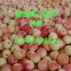 山东美八嘎啦苹果大量供应