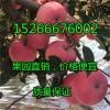 现在红将军苹果价格多钱一斤