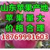 今日红星苹果价格2017红将军苹果产地批发什么价格