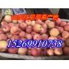 山东红星苹果产地富士苹果批发价格