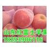 18253906116山东红将军苹果产地价格