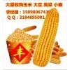 常年收购玉米大豆高粱碎米淀粉等饲料原料