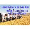 大量收购各地玉米;民发收购小麦大豆(实力厂家)