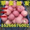 红富士苹果产地哪里有,山东红富士苹果价格