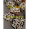 哪里的生姜价格便宜价格低15266676002