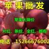 15266676002山东苹果价格山东红富士苹果今日价格
