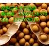 今日玉米价格行情走势 哪里收购玉米垄上养殖厂收购玉米大豆高粱
