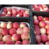 美八苹果价格山东美八苹果行情信息