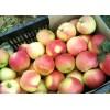 美八苹果山东美八苹果产地报价